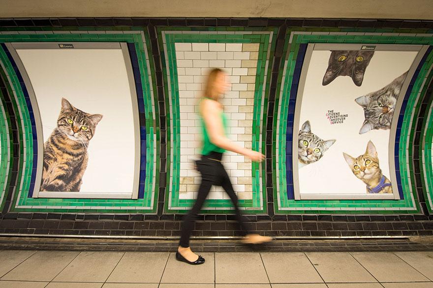 cat-ads-underground-subway-metro-london-11