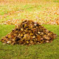 Pas question de jeter vos feuilles mortes, elles sont très utiles au jardin.